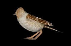 bird01 20161018 15 45 55