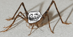 Beware Troll Cricket!
