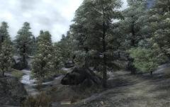 Jerall-Forest.jpg