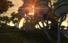 Mushroom Sunset.jpg