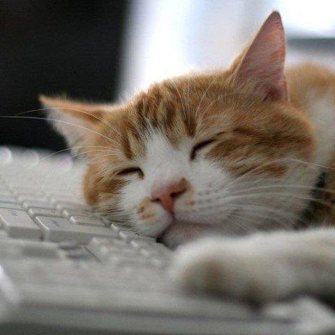 sleepy-cat.jpg.9ef7ee0e8ba9c593de0b9d76660be9dd.jpg